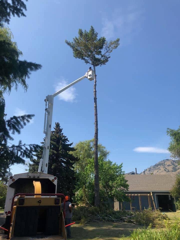 Tree Services in Kamloops