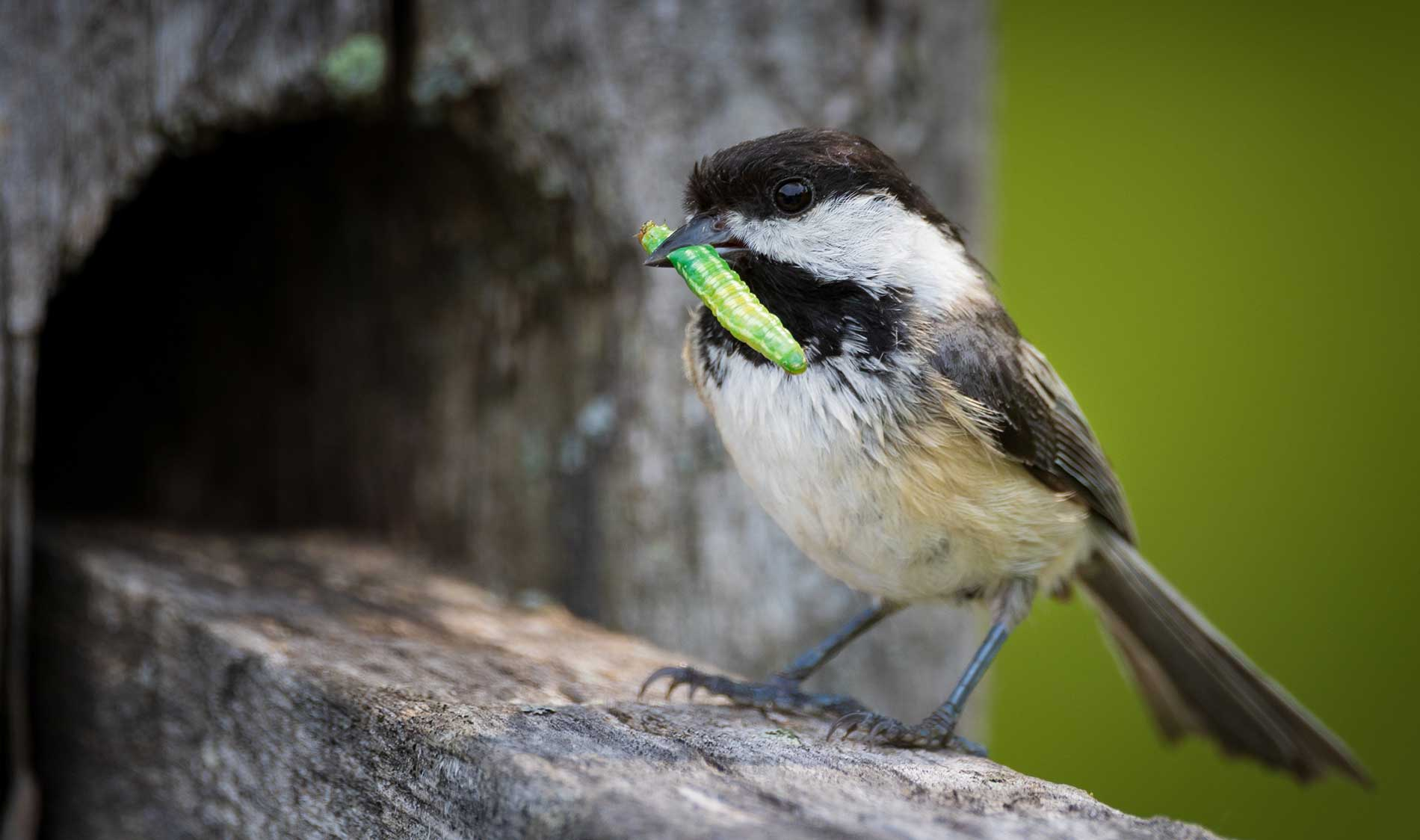 Bird-Friendly-Yards-For-Insect-Control