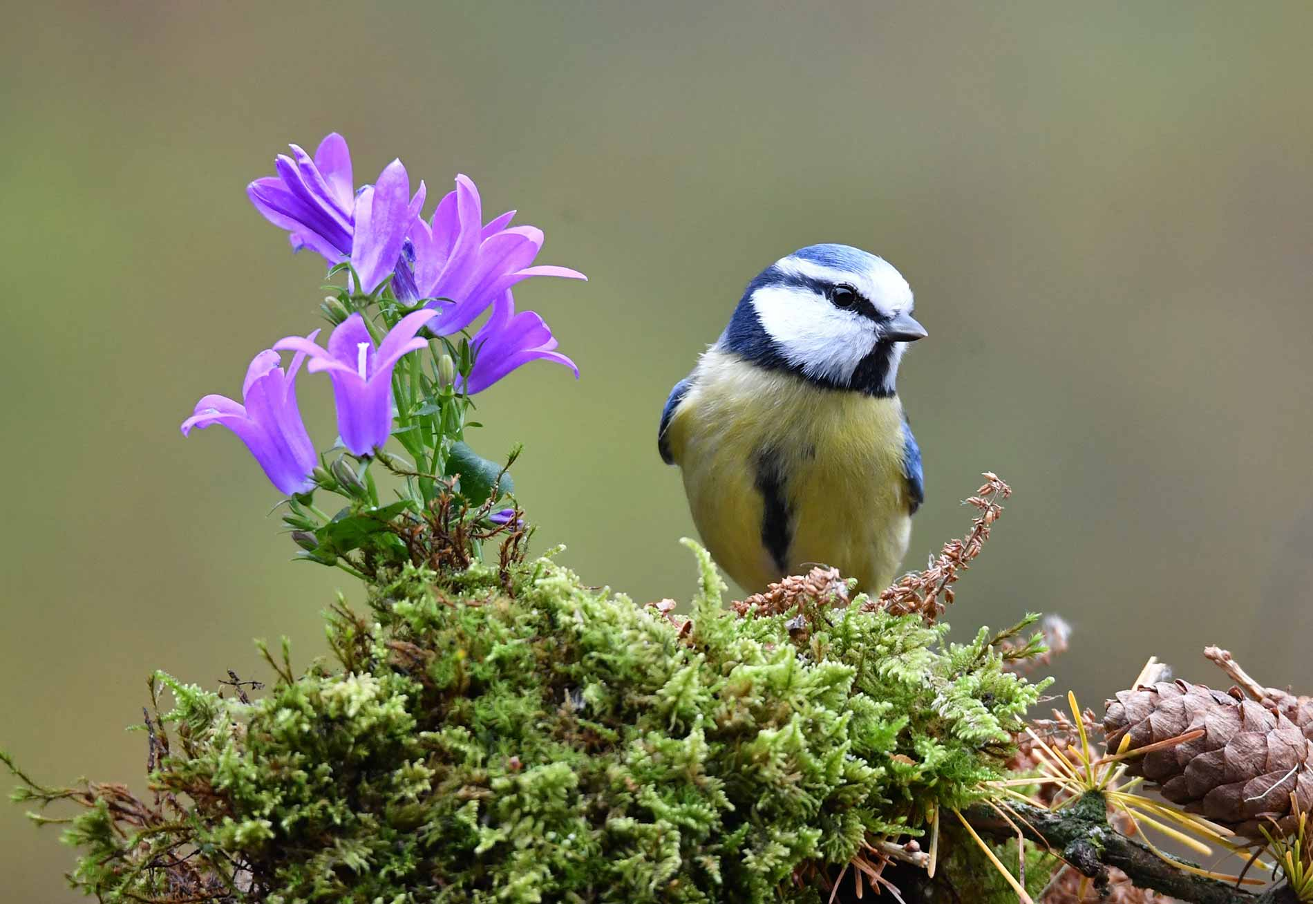 Trees-sustain-wildlife