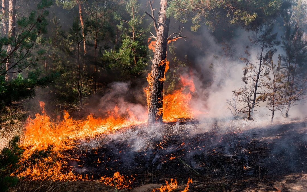 Wildfire Prevention Tips