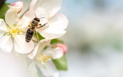 Bees and Trees – The Crucial Link