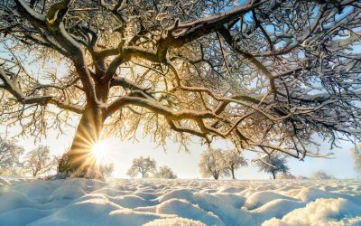 How To Winterize Your Trees