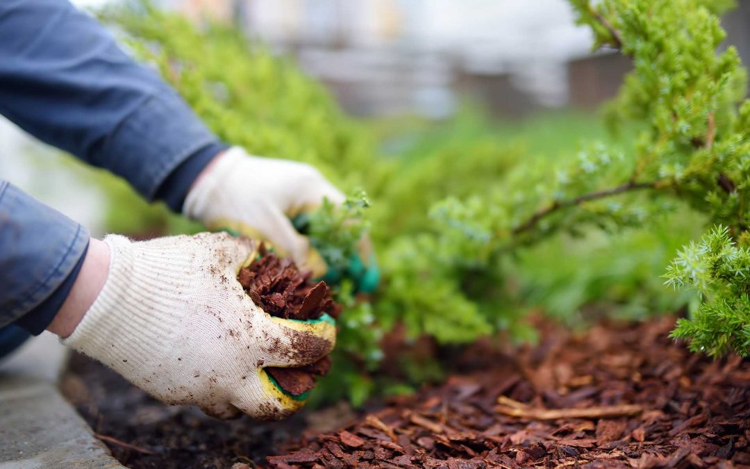 featuredimage-Checklist-for-Landscaping