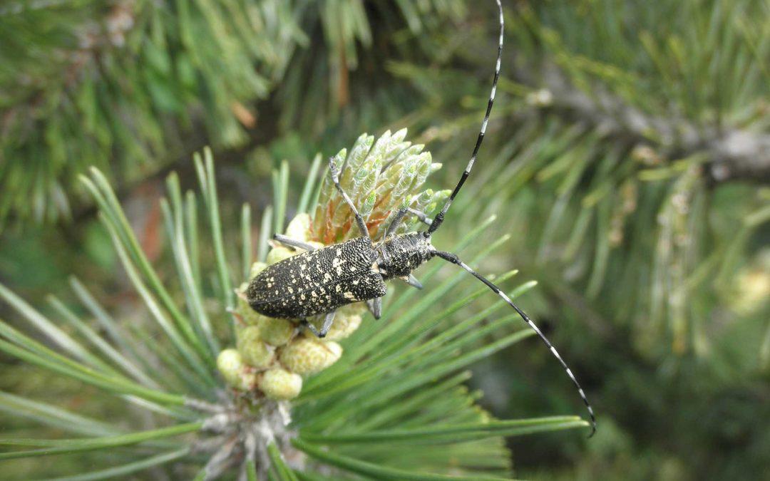 featuredimage-Managing-Invasive-Tree-Pests