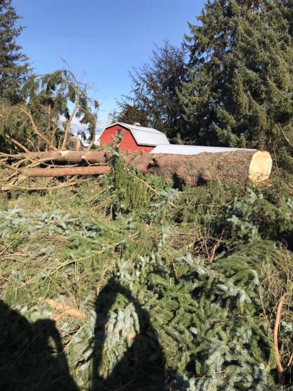Lot Clearing – Removing Trees for Your New Home