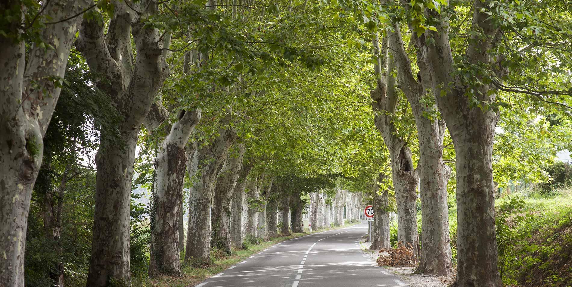 protecting-urban-trees