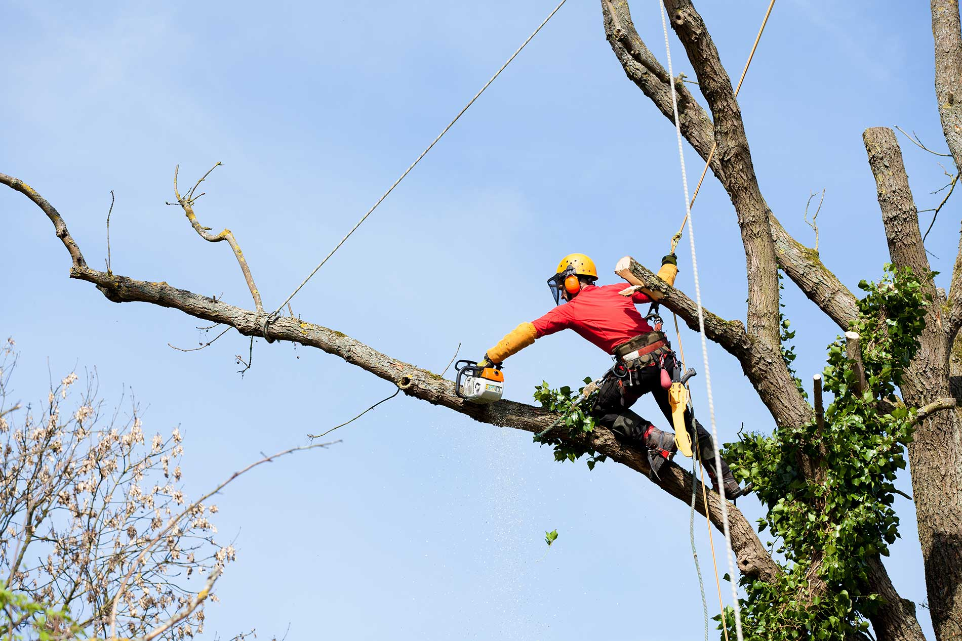 pruning-for-safety-trees