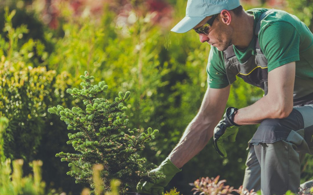 The Benefits of Fall Tree Planting