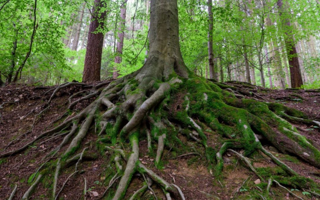 Tree Roots – A Network of Life
